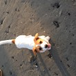 Puppy Video: Dolly's Day at the Beach!