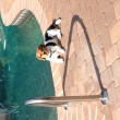 Jimi Houndrix Doggy Paddles in Pool!