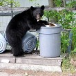 Hungry Bears Drop By For A Backyard Picnic