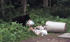 bear trash