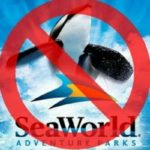 The Long-Awaited Undoing Of SeaWorld